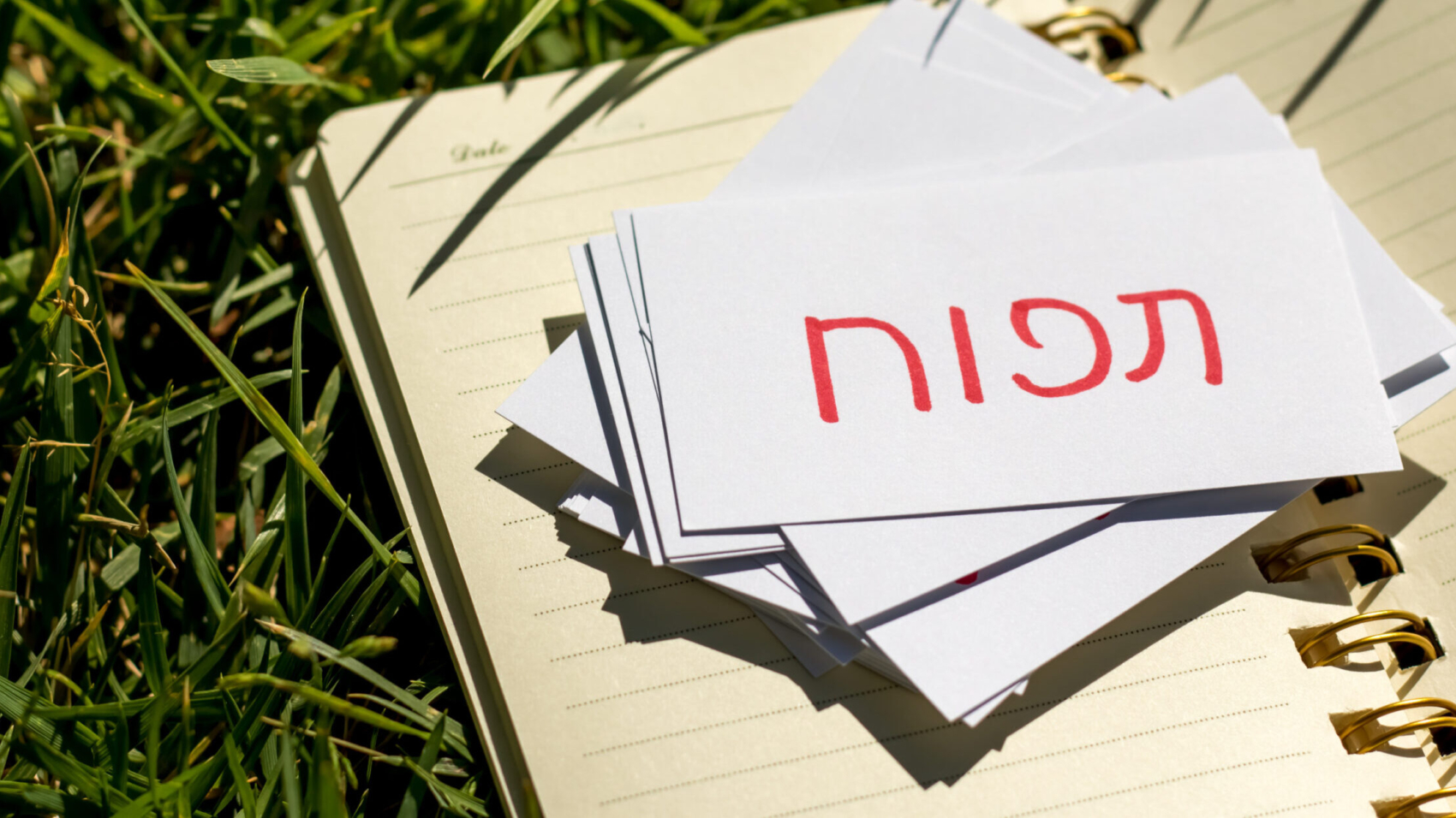 Hebrew;,Learning,New,Language,With,Handwritten,Flash,Cards.,Translation;,Apple